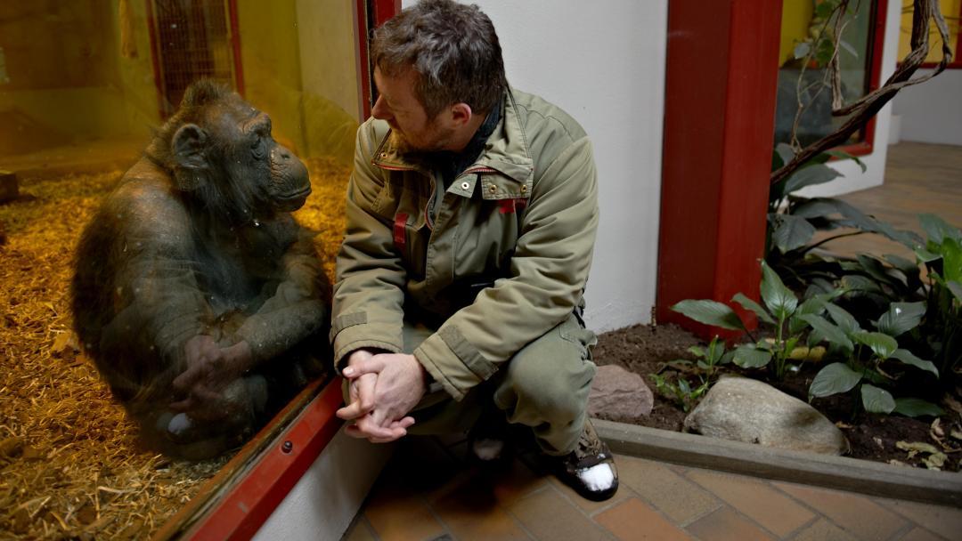 givskud zoo ulykke