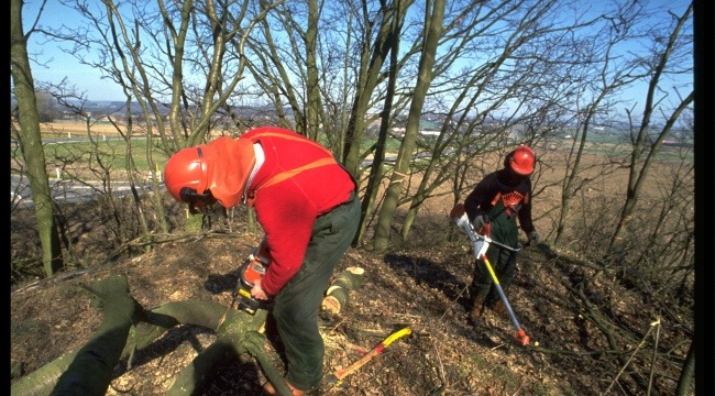 Virksomheden Langesø Skov og Golf kan fortsat uddanne skovelever.